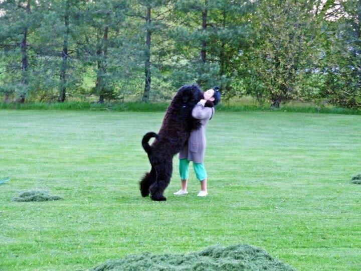 Orono Dog Show